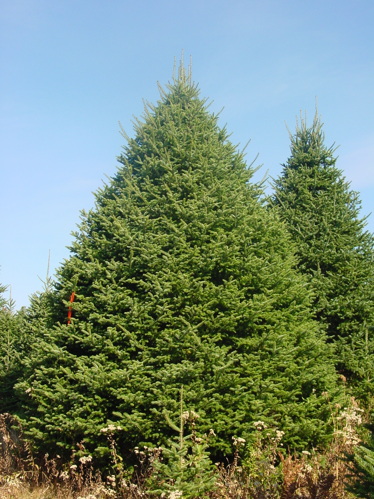 Christmas Tree Stands Wholesale